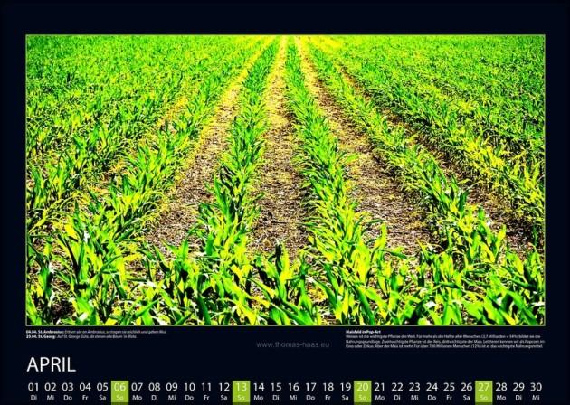 Überzeichnetes Maisfeld als Kalenderblatt