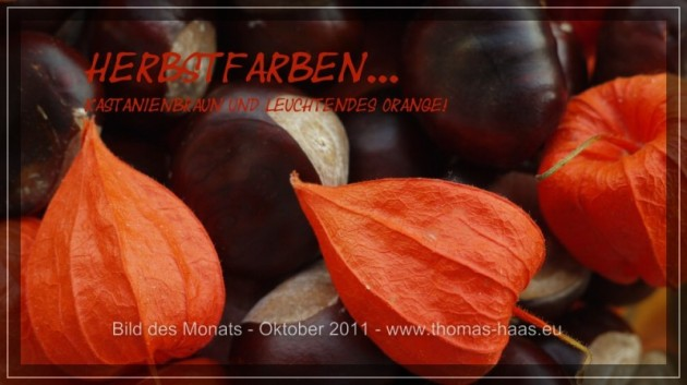 Herbstfarben, Kastanien und Lampinonblümchen