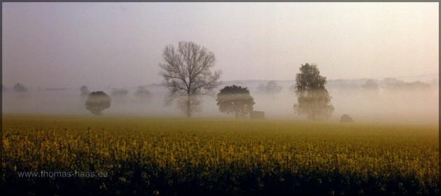 Rapsfeld im Nebel, Mai 2000