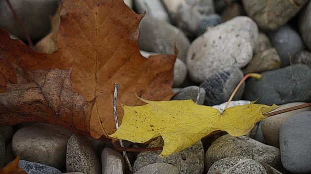 Herbstblätter und Flußkiesel - Bearbeitung in GIMP