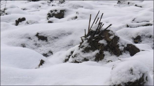 Ackerschollen unter Schnee, Dezember 2012