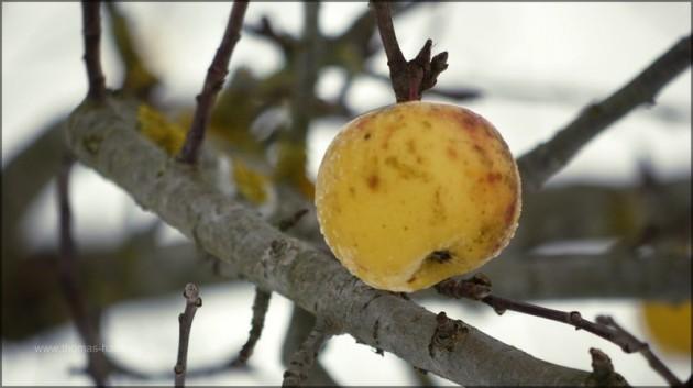 Der einsame Apfel, der seinen Sack nicht fand...