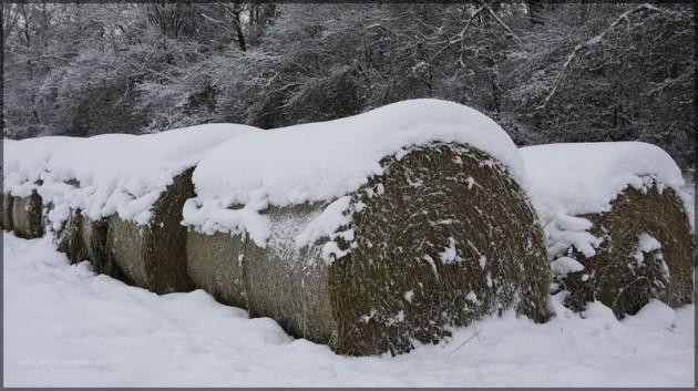 Heuballen unter einer dicken Schneeschicht