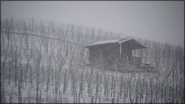 Verschneiter Weinberg mit Winzerhütte, Maingegend, Februar 2013