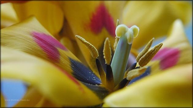 Fruehling! Die Tulpe steht symbolisch für der Frühlingsanfang!