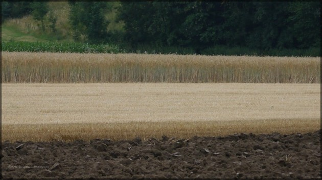 Landschaftsgrafik, Ende Juli 2013