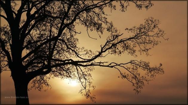Baumsilhouette bei Sonnenaufgang