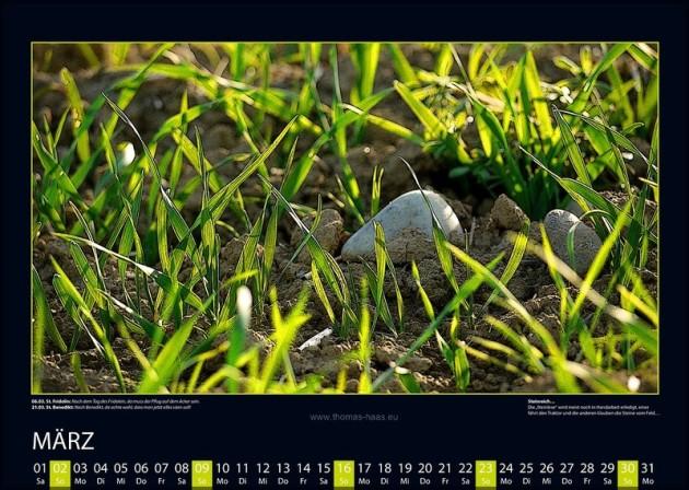 Steine zwischen frischem Grün auf dem Feld.