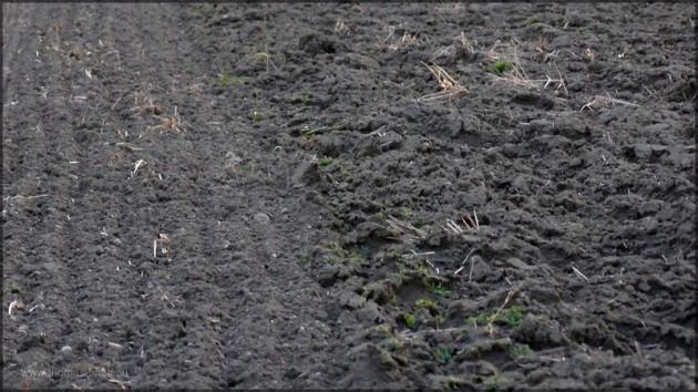 Zwei Felder, der Grenzbereich, März 2014