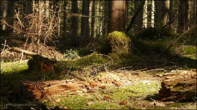 Bergwald-Baustelle: Der Wald wird umgebaut...
