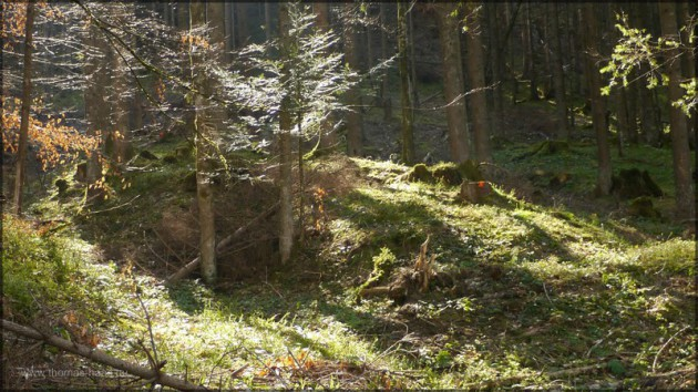 Bergwald im Allgäu