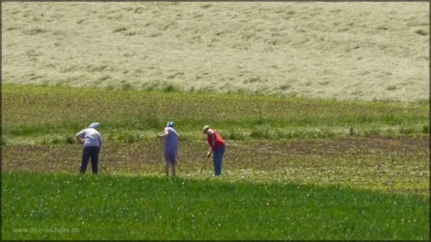 Frauen bei der Feldarbeit, Mai 2014