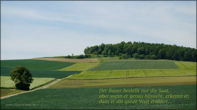 Getreidefelder und Text, Mai 2014