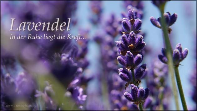Lavendel, in der Ruhe leigt die Kraft..., Juli 2014