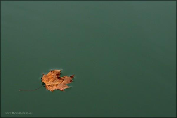 Ein einsames Blatt auf der Wasserfläche, Herbst...