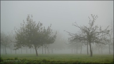 Nebel über der Streuosbstwiese, 01.11.2014