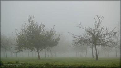 Nebel über der Streuobstwiese, 01.11.2014