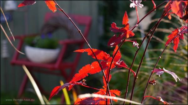 Ein schönes Herbstwochenende im Gegenlicht...