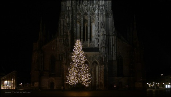 Der Weihnchtsbaum strahlt auf dem Münsterpaltz, Dezember 2014