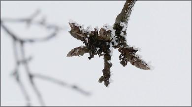 Zweige mit Frost, 01.Januar 2015