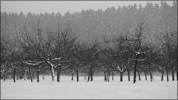 Das weiße Betttuch, etwas 40 cm Schnee am 01.Januar 2015