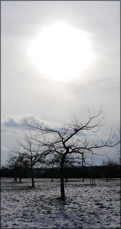 Die Sonne über der winterlichen Wiese.