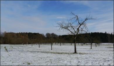 Streuobstwiese mit etwas Schnee