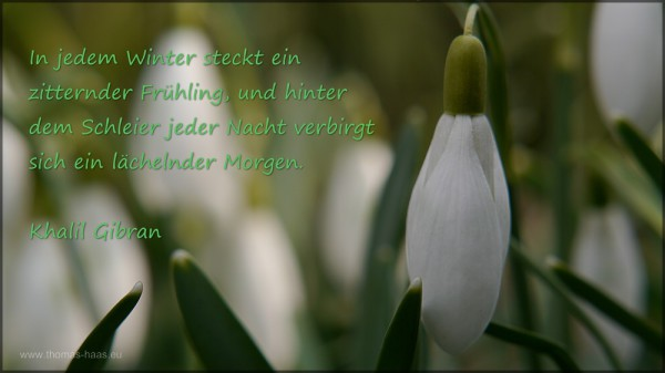 Textteil im Schneeglöckchen-Motiv, März 2015