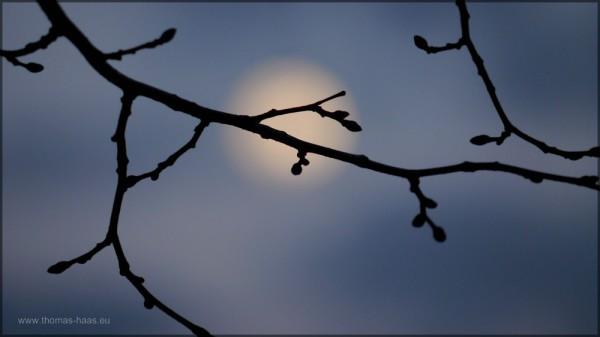 Mondlicht auf Zweig, März 2015