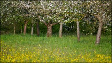 Bäume im hohen Gras, Mai 2015