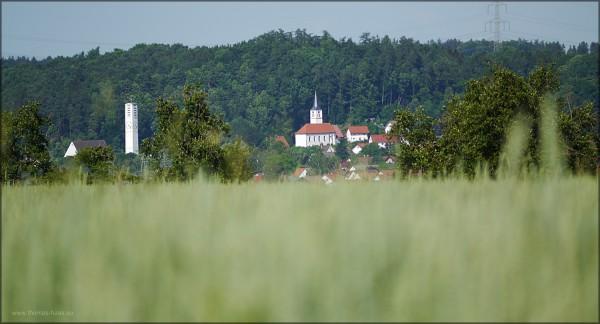 Quer über das Illertal. von Regglisweiler nach Bellenberg, Juni 2015