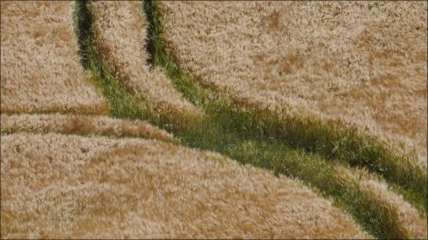 Getreidefeld in Laboe, Norddeutschland, Juli 2015