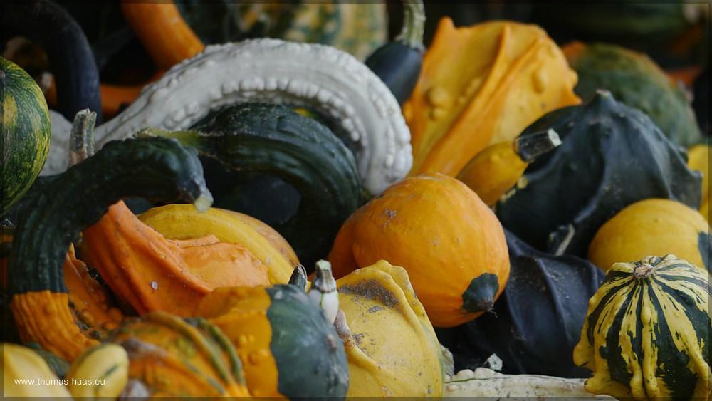 Ein Speil von Farben und Formen - Kürbisse, September 2015