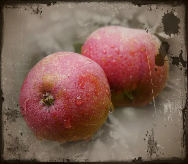 Äpfel in einer Bearbeitung in GIMP und PhotoScope, Oktober 2015
