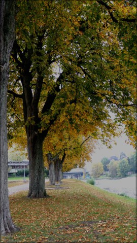 Neu-Ulm, Edwin-Schraff-Haus, Oktober 2015
