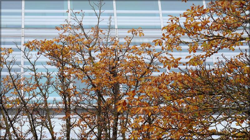 Glasfassade der Bibliothek, Oktober 2015