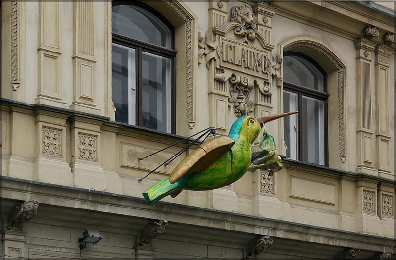 Kolibri am Judenhof, Oktober 2015