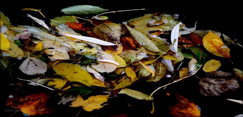 Laubansammlung auf dem Flüsschen Blau, Oktober 2015