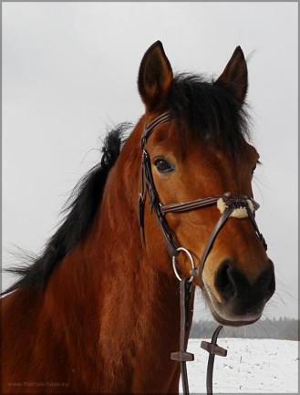 Pony Arno