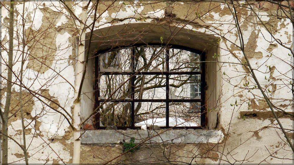 Fensterblick, 2016