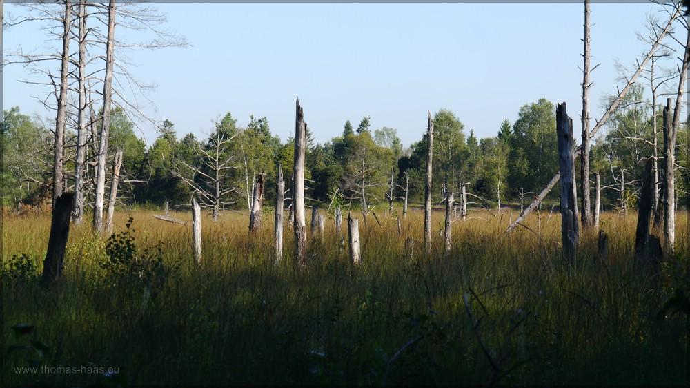 Totholz, abgestorbenen Bäume, 2016