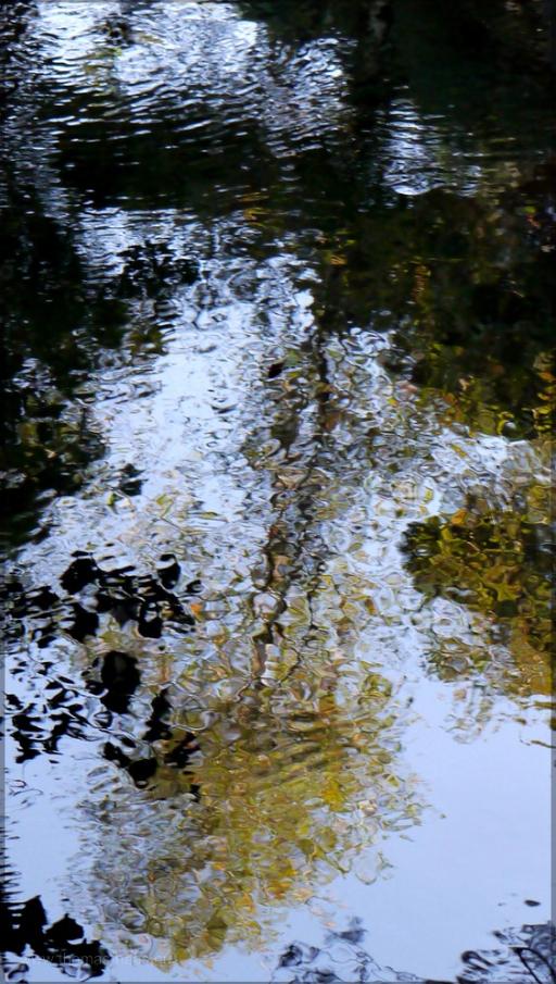 Spiegelung im Bachlauf