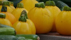 Gelb und grüm, schlank und rund,Zucchini