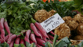 Eigenanbau: Rettich & Sellerie