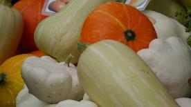 Zierkürbisse, bunt und formenreich