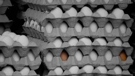 Hühnereier auf dem Wochenmarkt