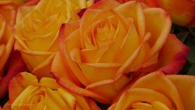 Blumen gehören auch zum Markt!