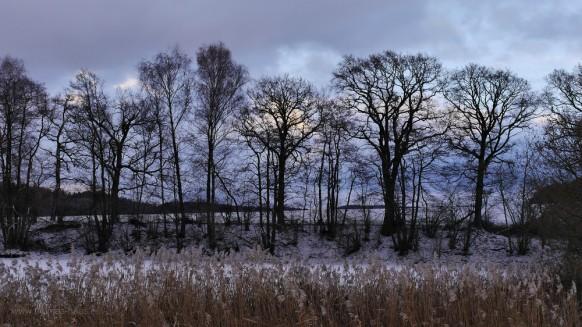Bild des Monats - Februar 2017, Winter, Roggenburg Stuerzenweiher