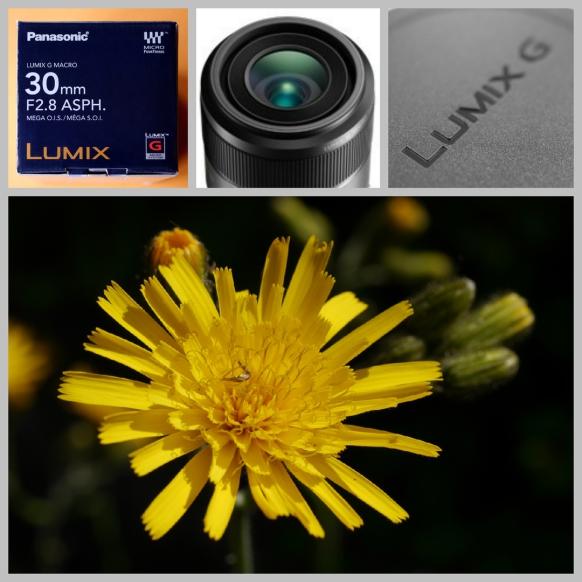 Neuinvestition: Lumix G Macro 30 mm