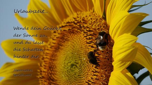 Sonnenblume mit Textteil zur Urlaubszeit 2017